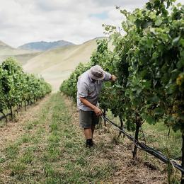 Tohu wines: The taste of Māori values