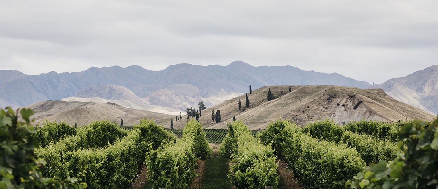 Discover the story behind the Gauchezco winery